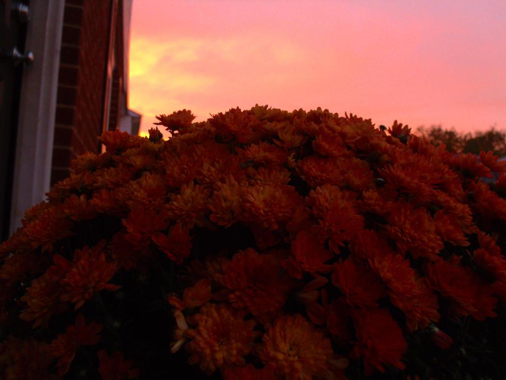 Autumn's Sunset by MaximumARide
