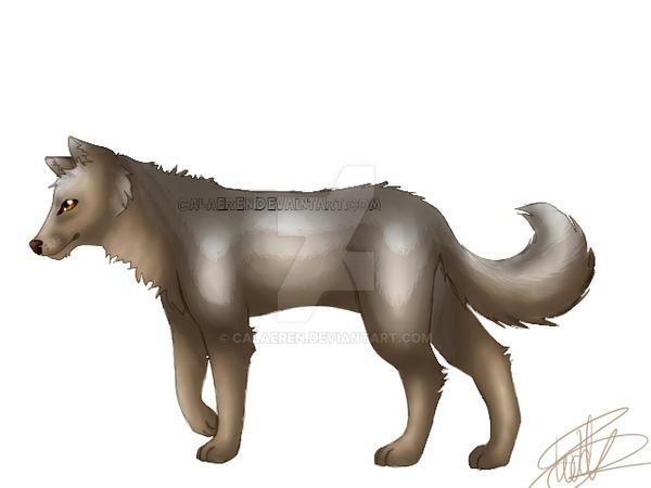 Wolf Practice by Calaeren