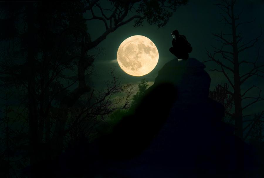 Shadow of the forest by BirmanCat