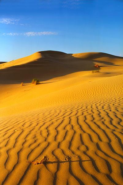 Desert scene by yakushkin