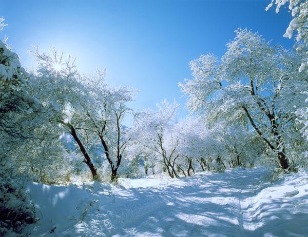 Winter road by yakushkin