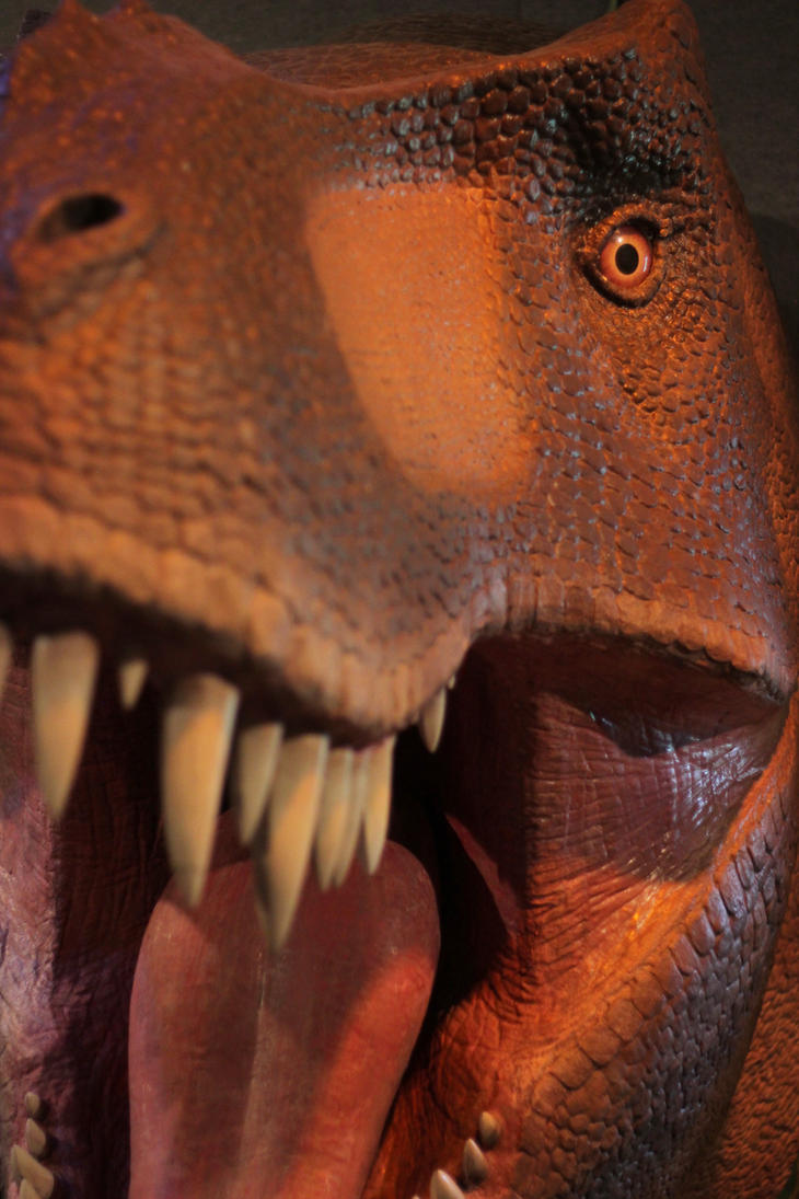 T-Rex Close Up - freebie noncommercial by albrecht995
