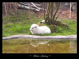 snow fox by meeko-okeem