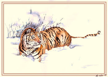 Tiger in the snow