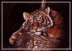 Tiger meow