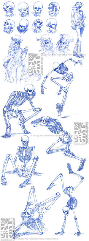 Skeletal Sketchdump