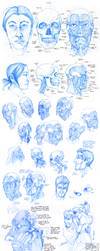 Anatomy - Facial Muscles by Quarter-Virus