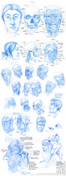 Anatomy - Facial Muscles