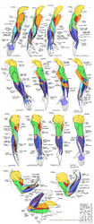 Anatomy - Human Arm Muscles by Quarter-Virus