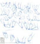 Anatomy - Human Feet