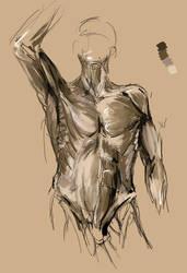 Anatomyir