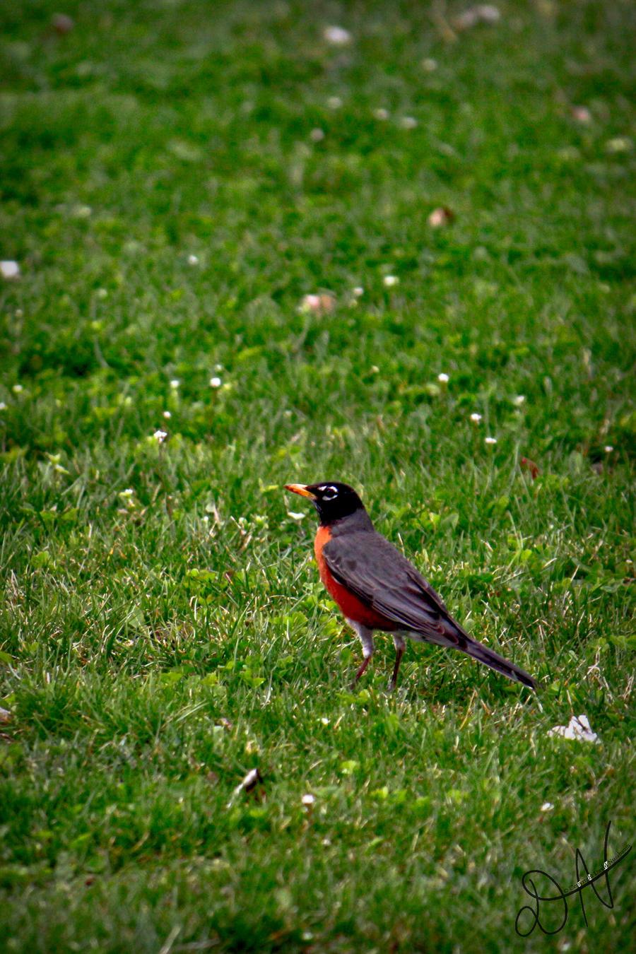 Robin Stare by PenguinOfRohan