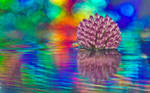 Full of Colors