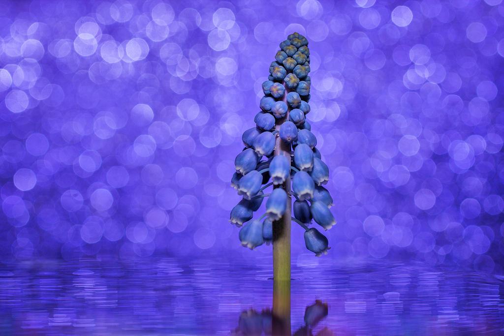 Purplelicious by DanielHeydecke