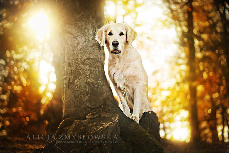 Sunny autumn by feanutri