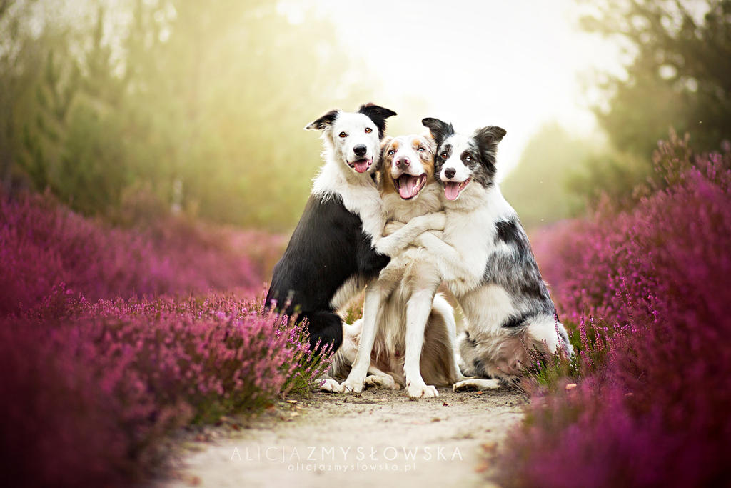 Friends by feanutri