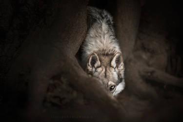Night of a Hunter by feanutri