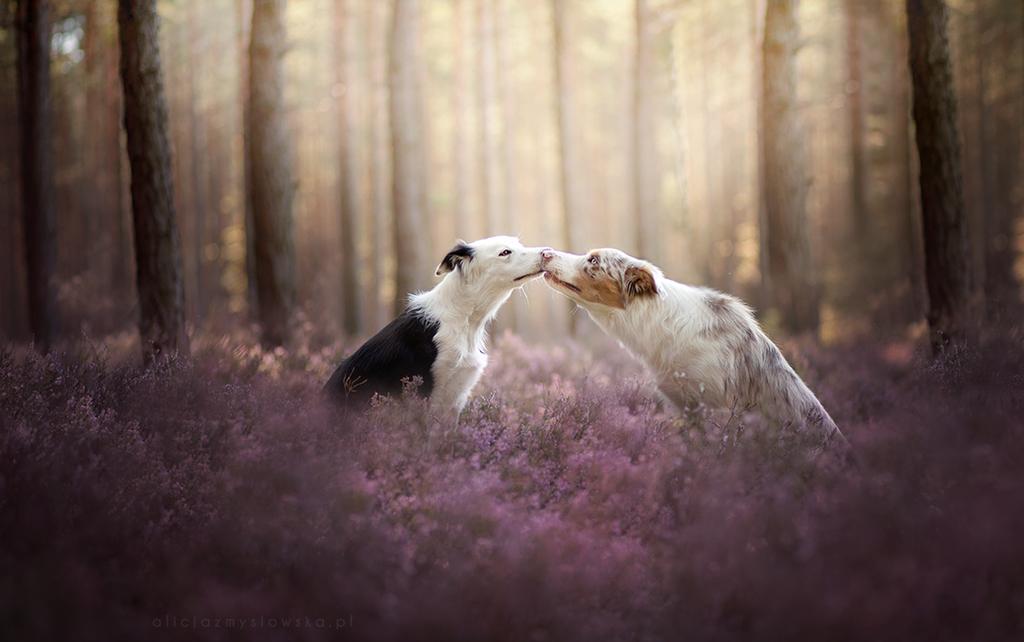 Kiss! by feanutri