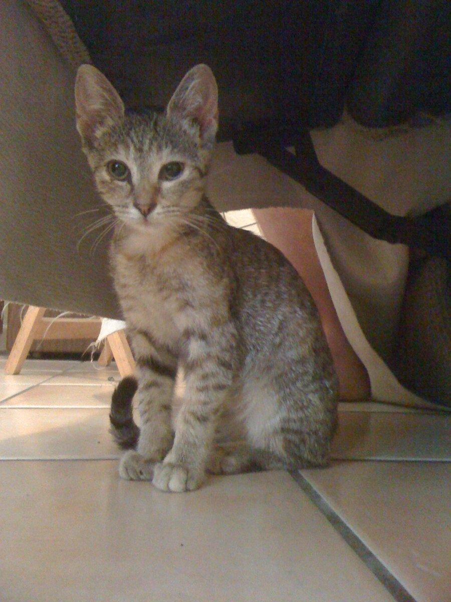 Sitting Kitten by Cerestes-Stock