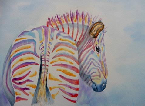 Zebra rich in colour