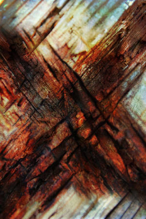 Free Texture 21 by SprenklePhotography