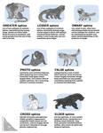 sphinx classification