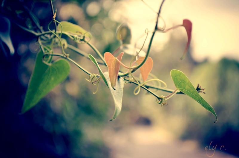 interweaving of nature by aPurringCat