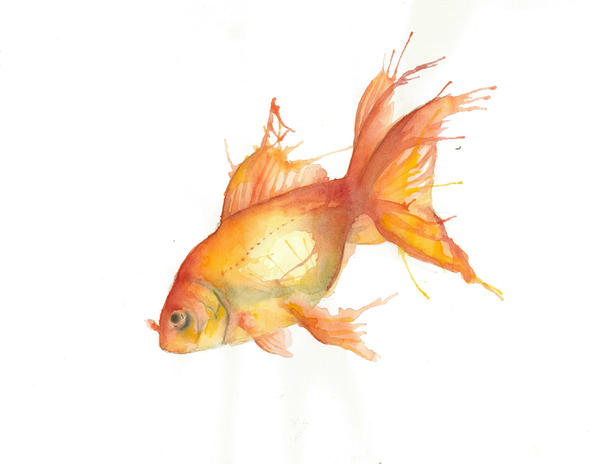 Aquarelle d 39 un poisson rouge by eden bird on deviantart for Acheter poisson rouge animalis