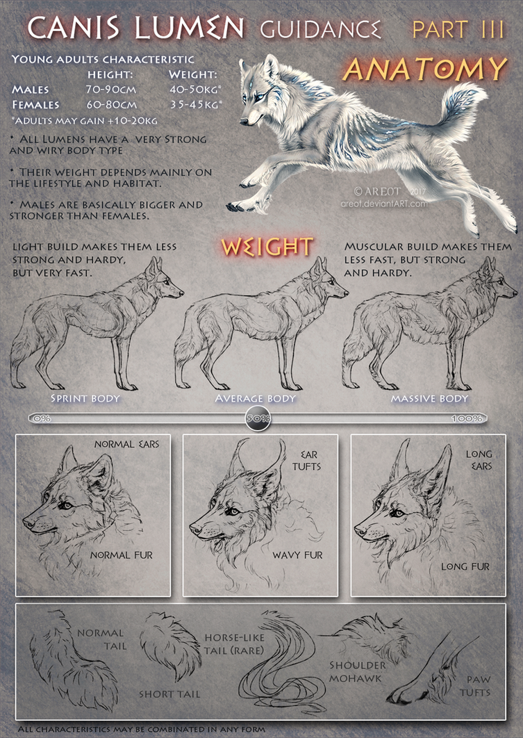 Canis Lumen guidance Part III Anatomy by areot on DeviantArt