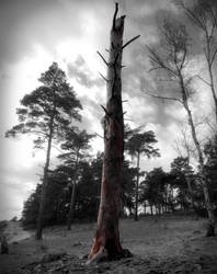 Dead Tree by pukingSpider
