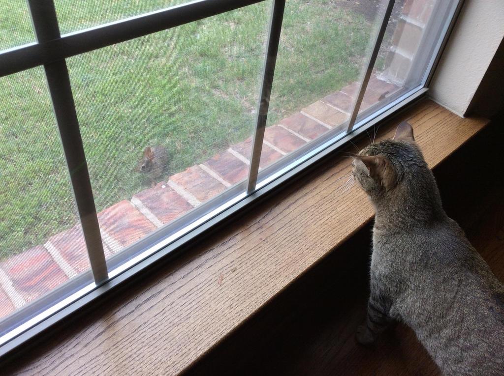 Wynne wants a bunny by QuackitiyAJ