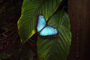 butterfly by tazzie4