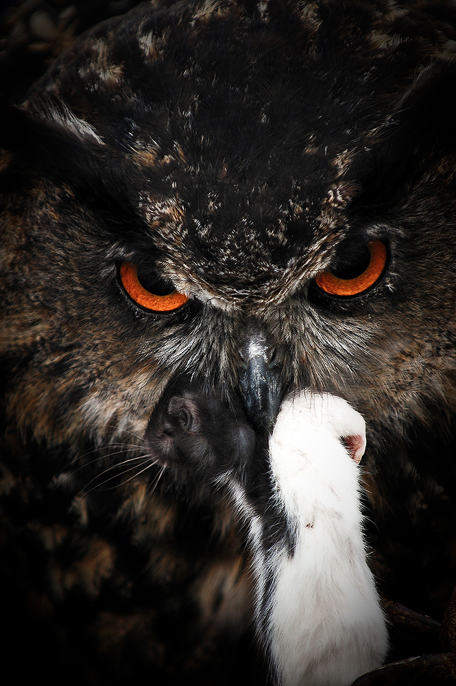 Eagle Owl II rework by Schoelli