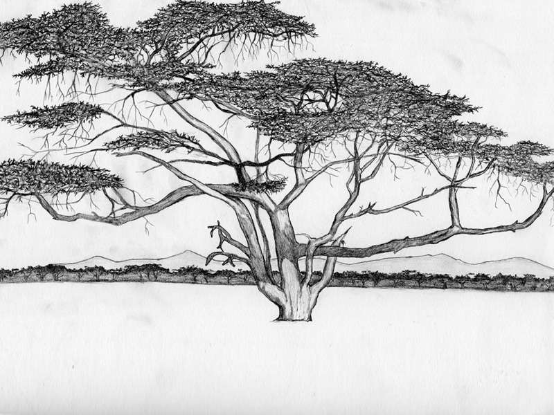 african trees coloring pages - photo#17