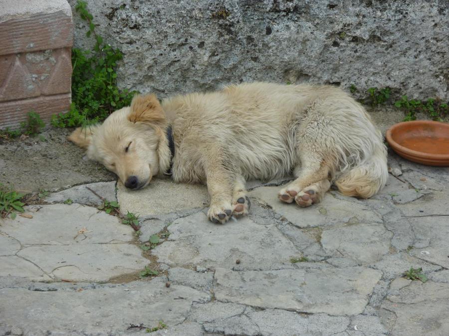 Puppy by Lionpelt-66