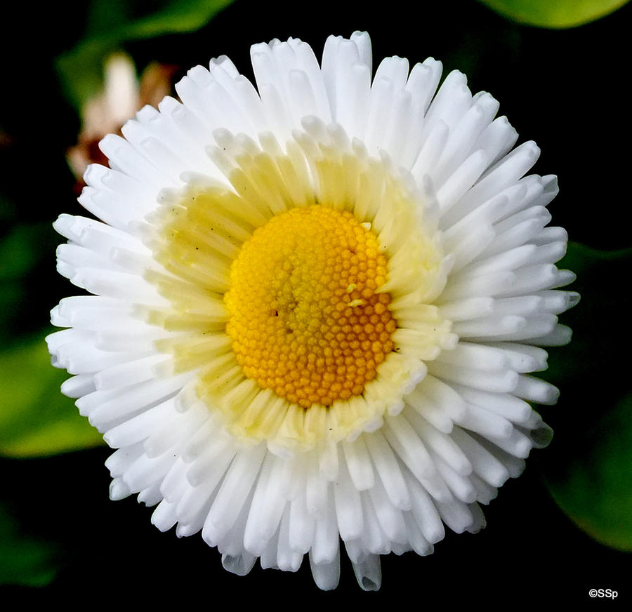Flower 2 by Lionpelt-66