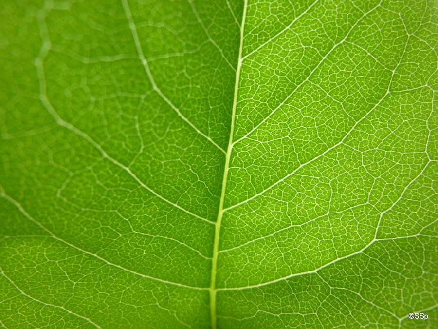 leaf by Lionpelt-66