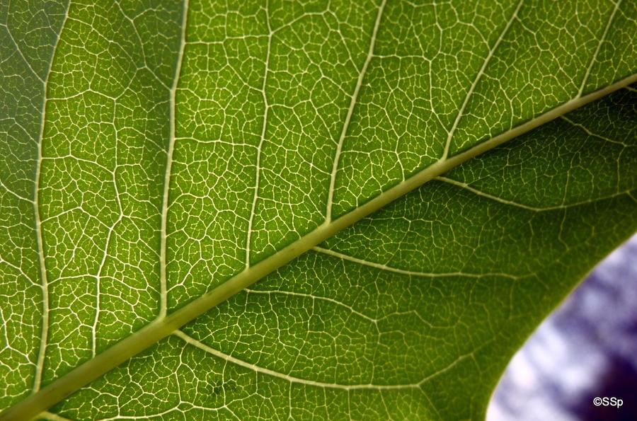 Leaf 3 by Lionpelt-66