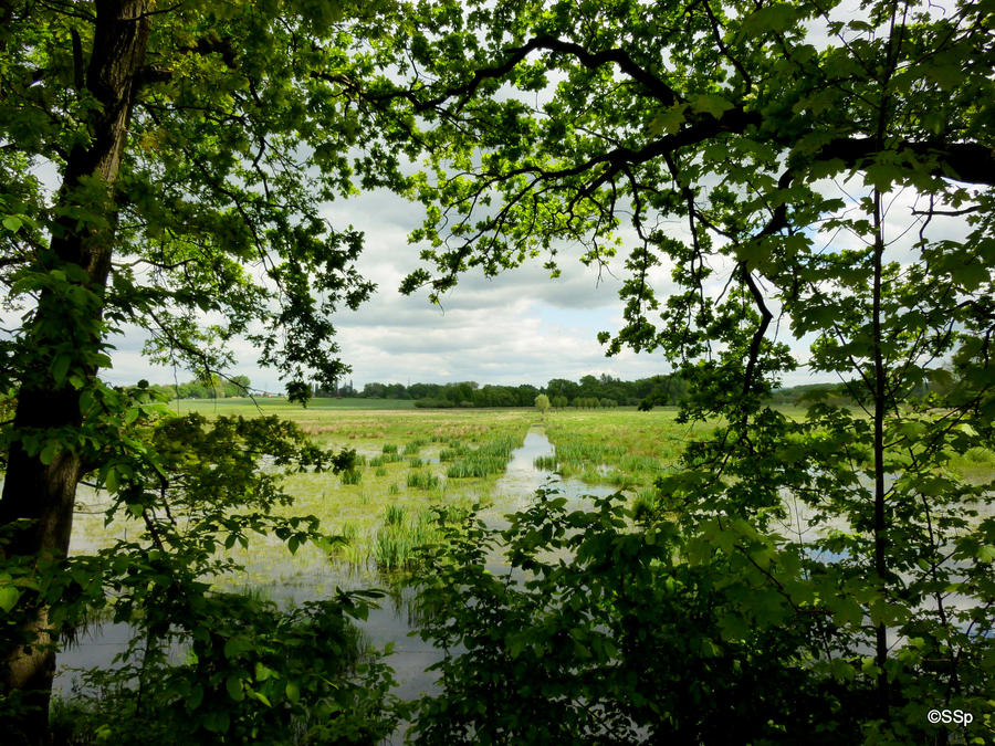 Landscape by Lionpelt-66