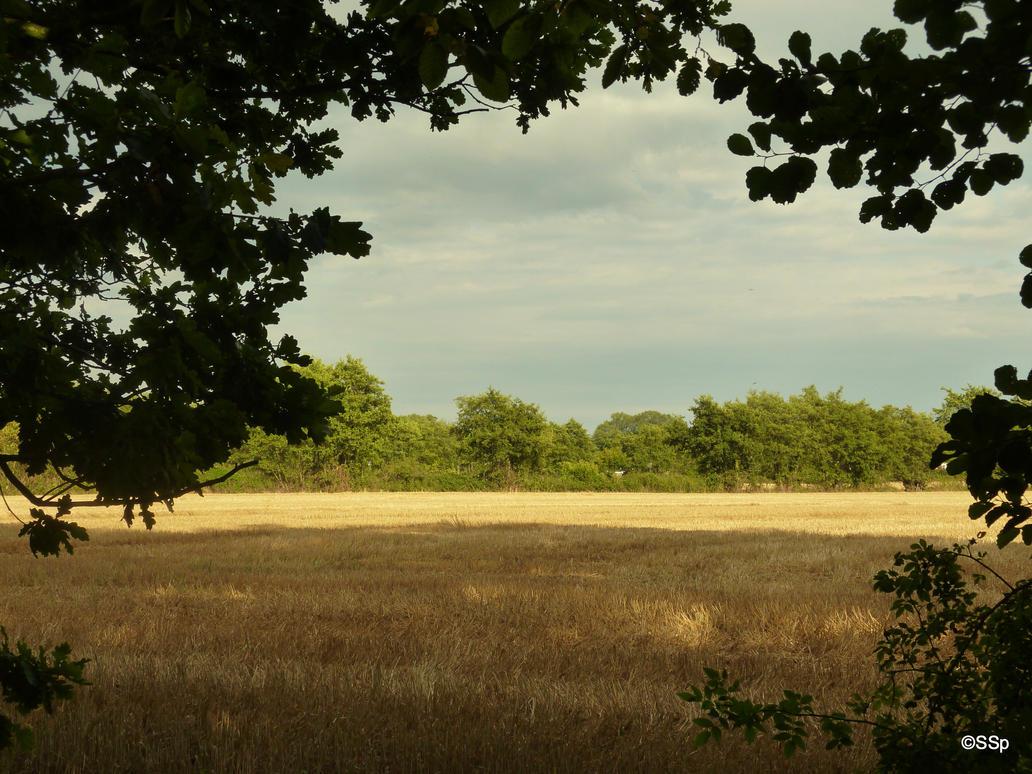 natural framing by Lionpelt-66