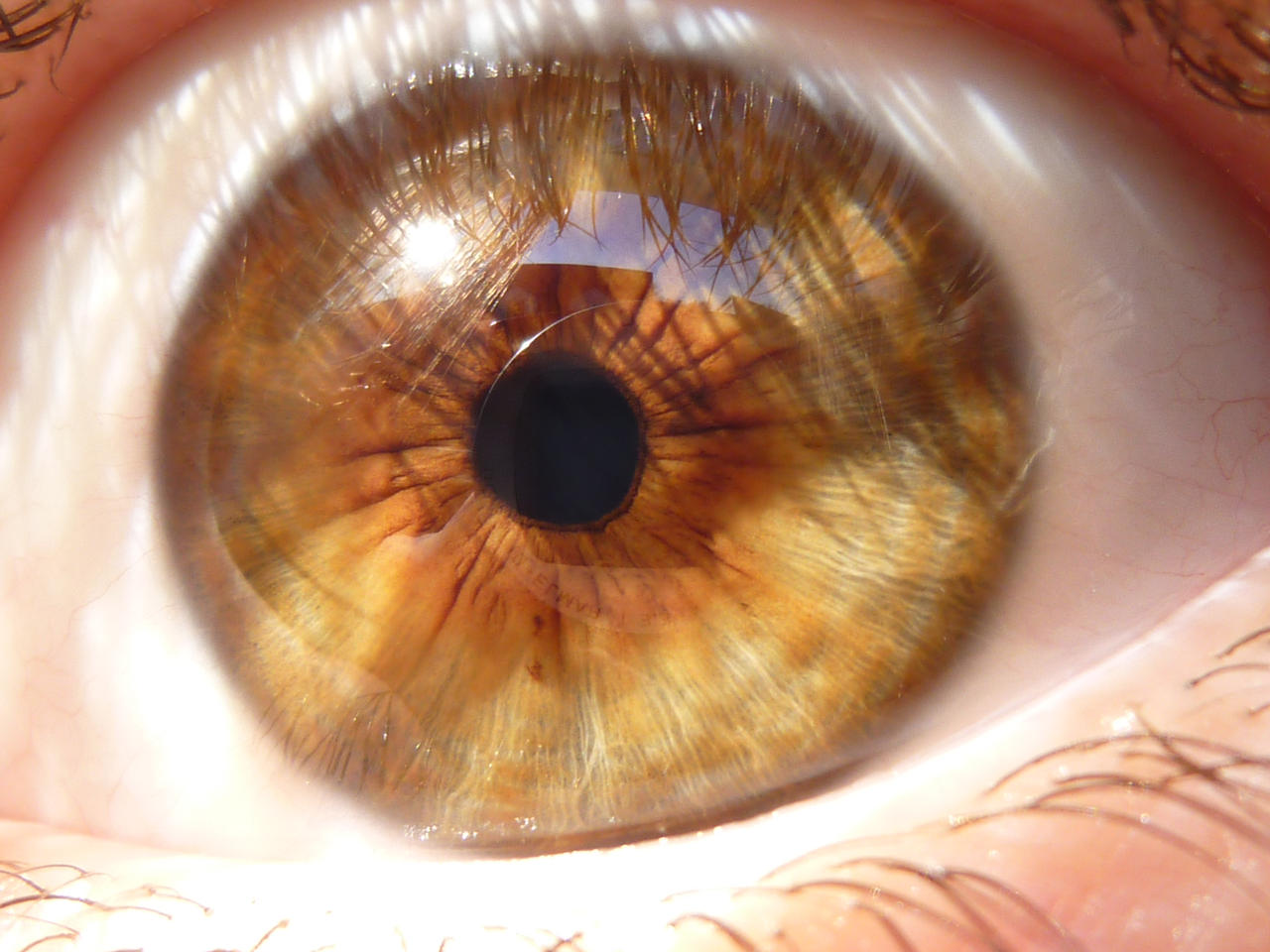 Eye Stock by Lionpelt-66