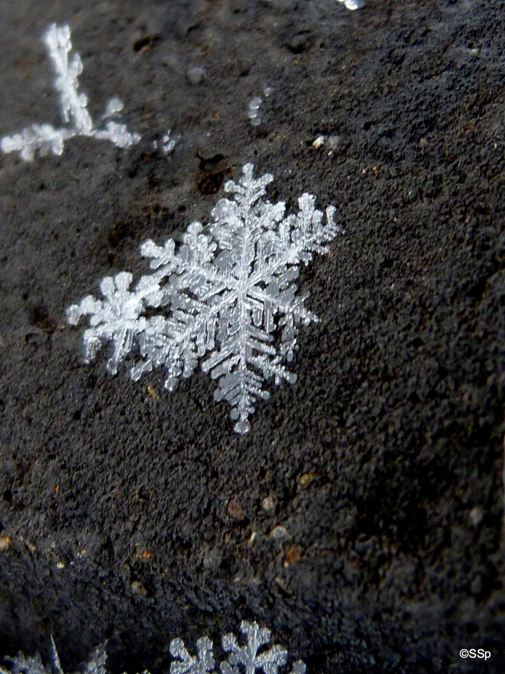 Snow Flake by Lionpelt-66