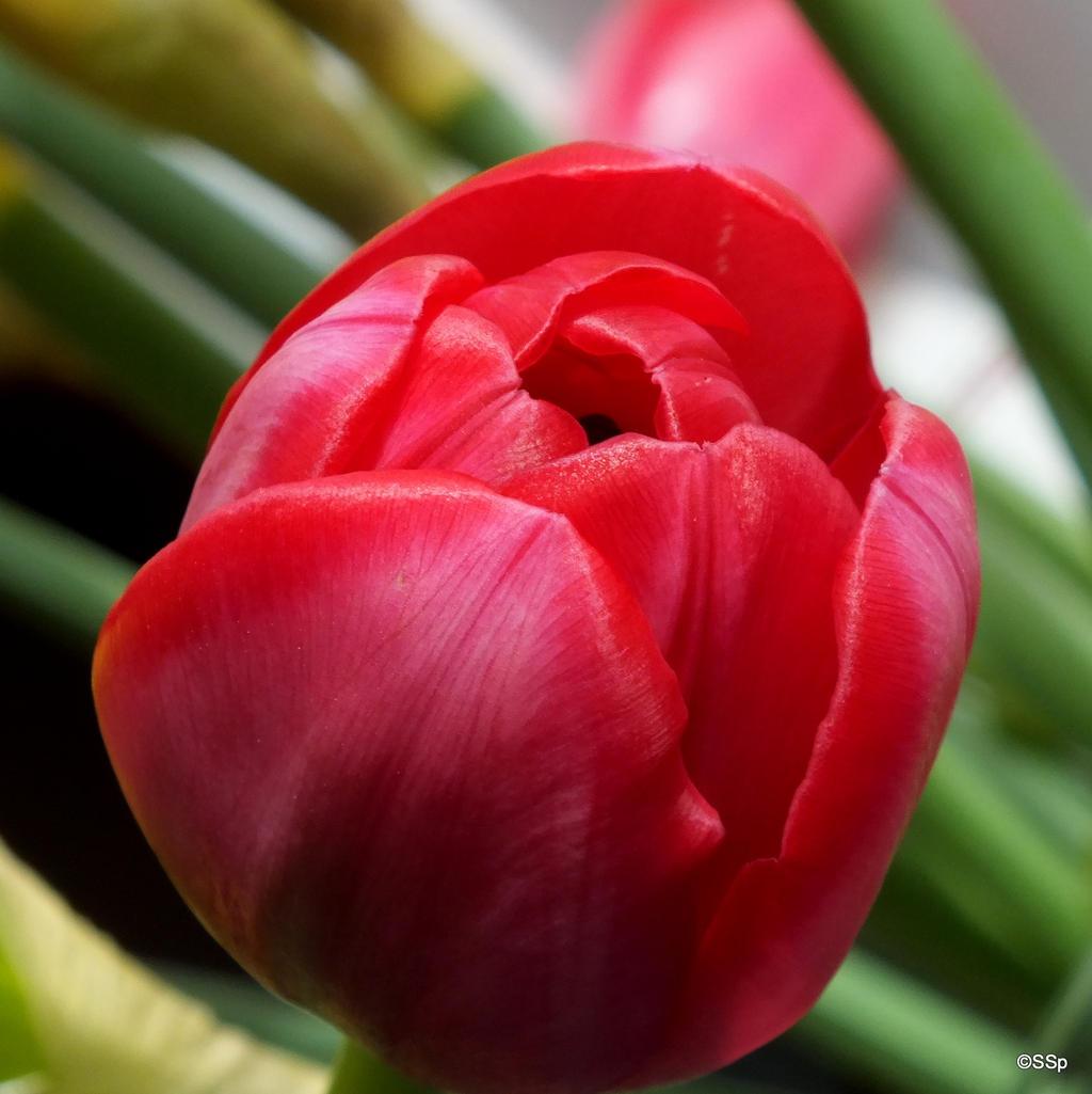 Spring by Lionpelt-66