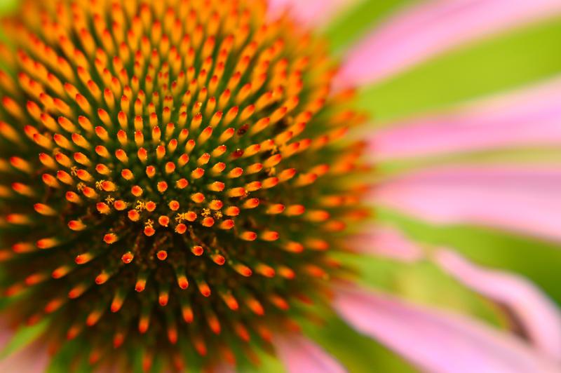 Spiky Flower by Lionpelt-66