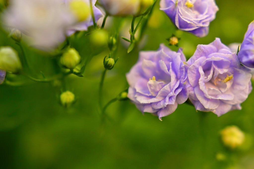 Purple Princesses by Lionpelt-66