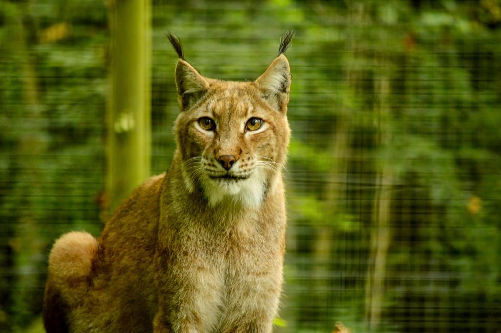 Pretty Kitty by Lionpelt-66
