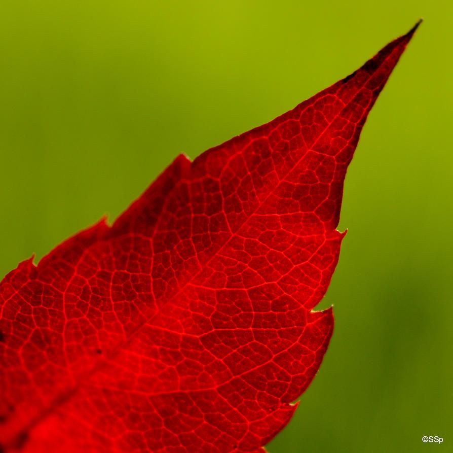 Autumn Contrasts by Lionpelt-66