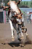 Helix Rodeo 09: Close Up by saudimack