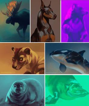 Color palette studies