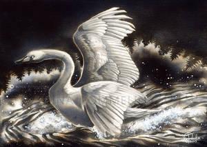 Old Gods: Day 18 - Swan